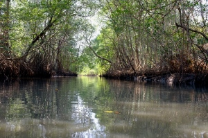 Mangrove Forests near La Tirana, a community targeted for a large tourism project