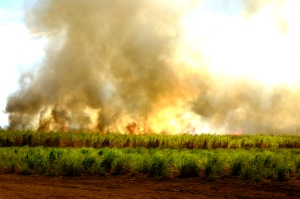 Sugarcane burning in the Bajo Lempa